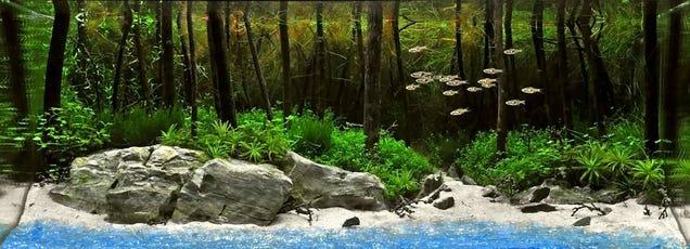 natural landscapes are Fish Tank Landscape Ideas