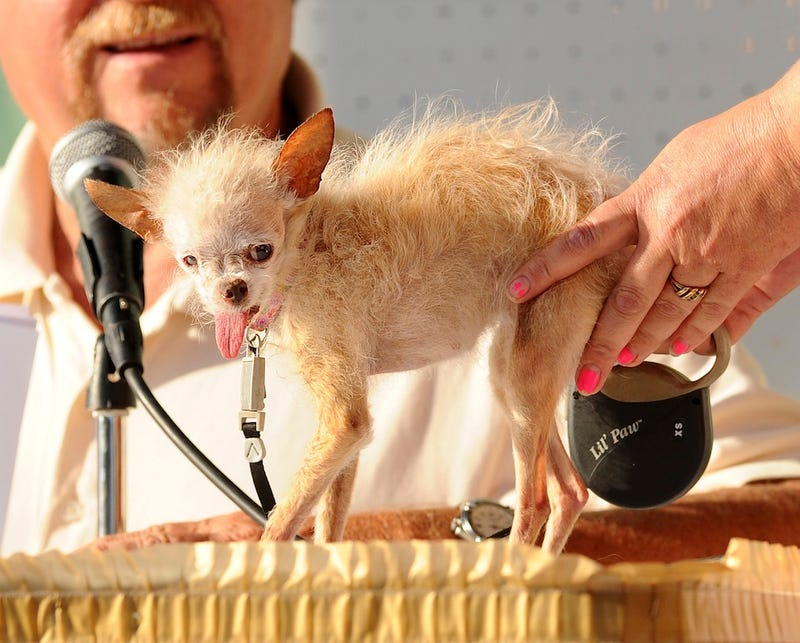 Meet the World's Ugliest Dogs