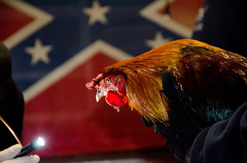 "Angry Cockfighters in Kentucky Vow to ""Destroy"" Mitch McConnell"