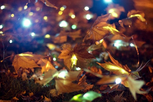Ephemeral Autumn Gallery