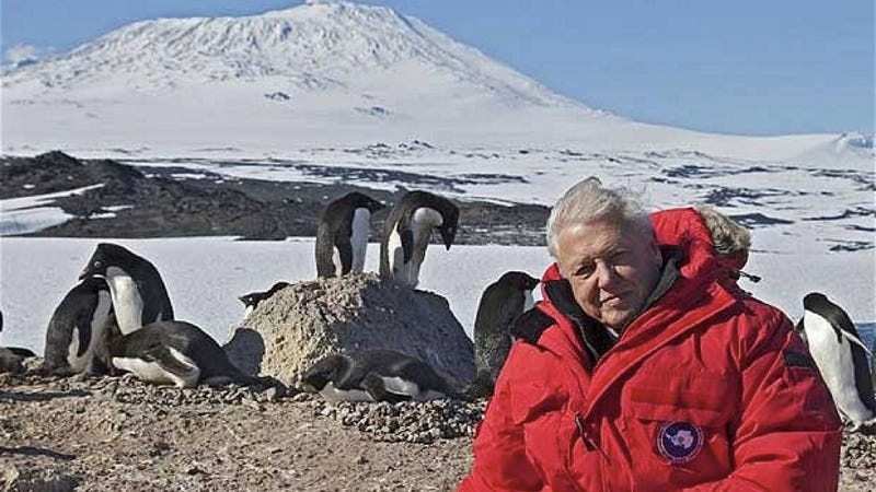 David Attenborough weighs in on the consequences of climate change — but you won't hear him in the U.S.