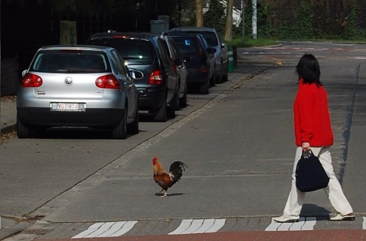 Philosopher Reveals Why Chicken Crossed Road