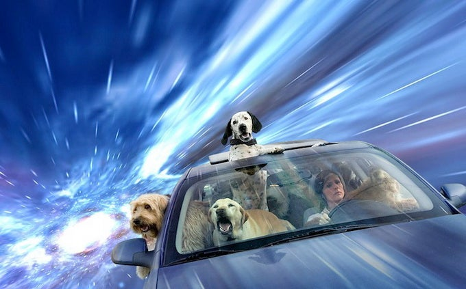 Dogs love sticking their heads out the window even more at warp speed
