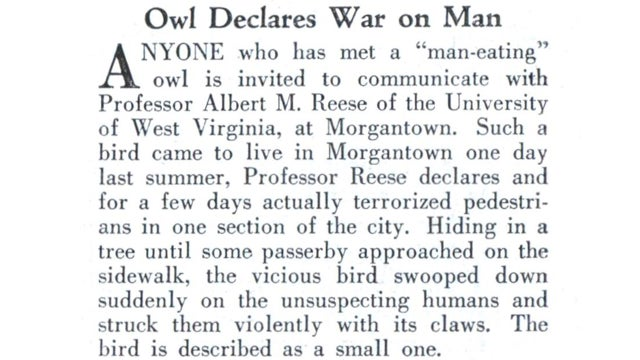 80 years ago, the best headline ever about owls was written