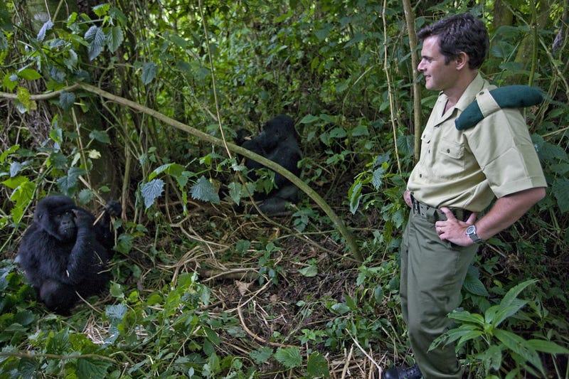 Kis híján agyonlőtték a hegyi gorillás nemzeti park főnökét