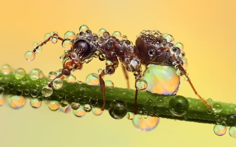 Behold the jewel-like beauty of dew-covered insects photographed close-up