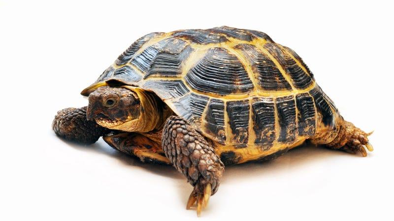 JFK Runway Shut Down Because of Turtle Infestation