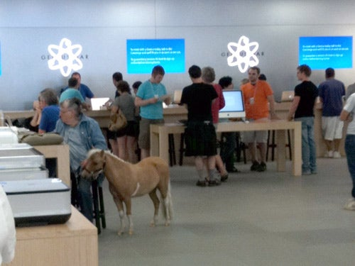 Yes, That's a Horse Inside an Apple Store