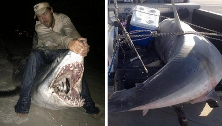 Fisherman Loses His Record for 805-pound Shark on a Technicality