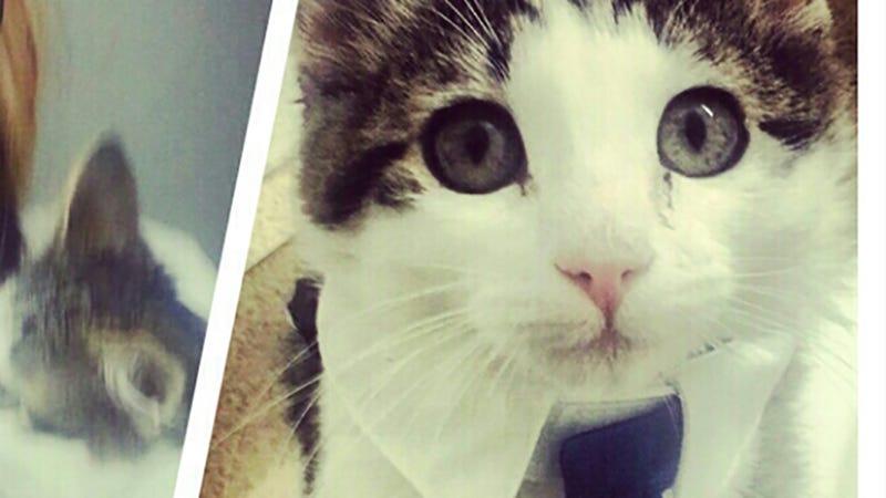 Cat Attack Sends Three to Hospital