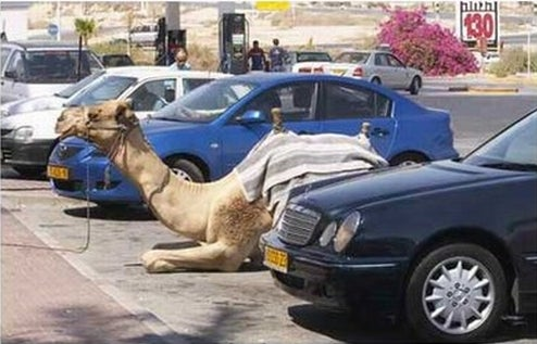 This Is Why People Think Camel Drivers Are Asshats