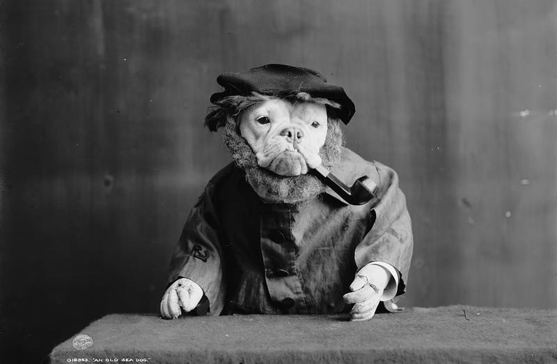 Vintage Photos Reveal Century-Long Obession with Dressing Up Pets