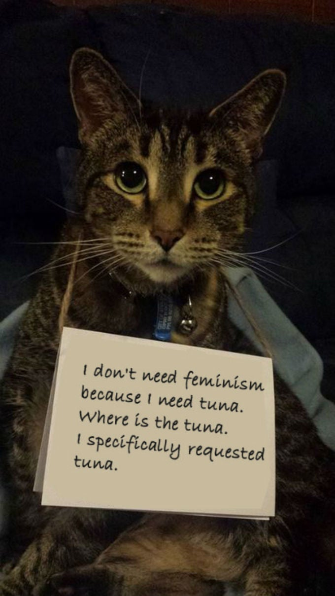 Confused Cats on Tumblr Don't Need Feminism Because They Are Cats