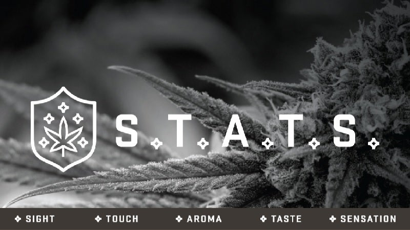 Become a Cannabis Connoisseur With the S.T.A.T.S. Evaluation Guide