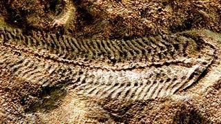 Revelan cómo se extinguió la primera forma de vida compleja de la Tierra