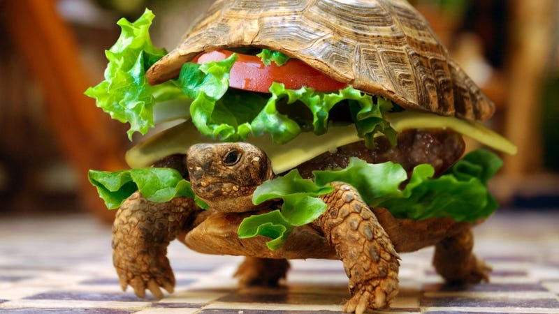 Man Unsuccessfully Smuggles a Turtle in a Hamburger