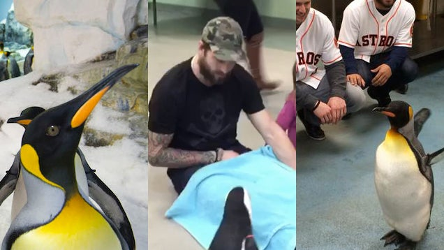 Which Athlete Was The Best At Hanging Out With A Penguin?