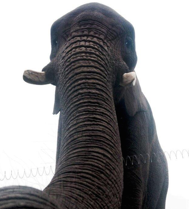 Behold the World's First Elephant Selfie