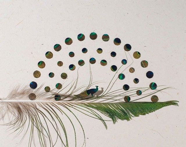 Delicate Images of Birds Painstakingly Clipped from Real Feathers