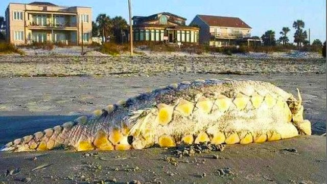 The Little Mermaid's fish legs washed up in South Carolina