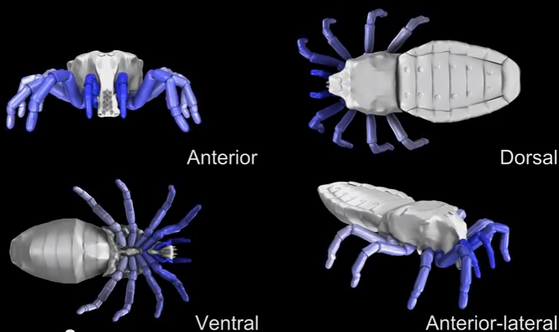 Creepy Simulation Shows How Ancient Arachnids Actually Walked