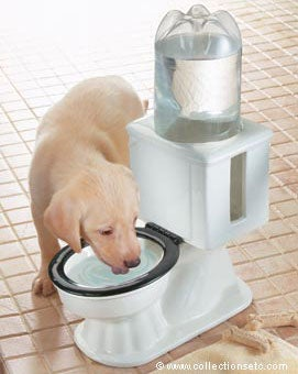 Refilling Dog Bowl: For Potty-Mouth Pets