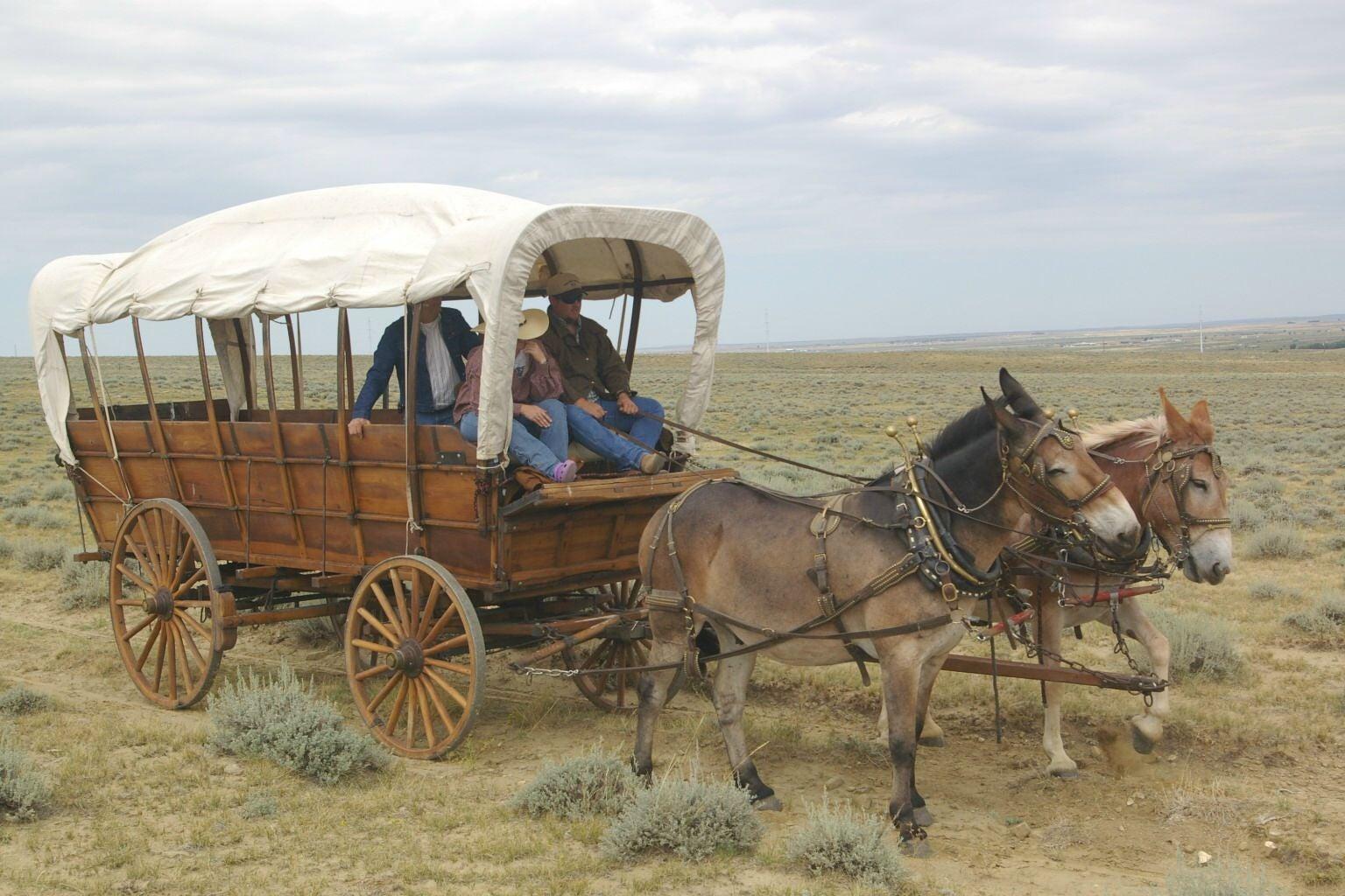 Wagon Wednesday