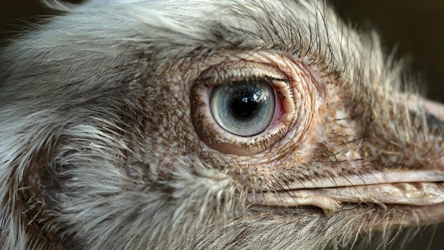 One Way That Bird Brains Could Be Superior to Mammal Brains