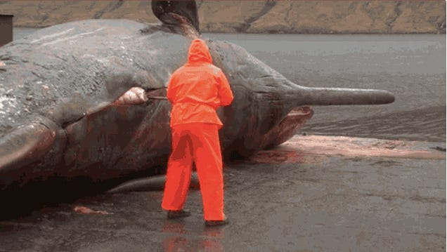 I can't stop watching this whale explode