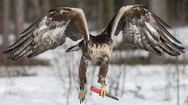 Yes, that really is an eagle wielding a knife