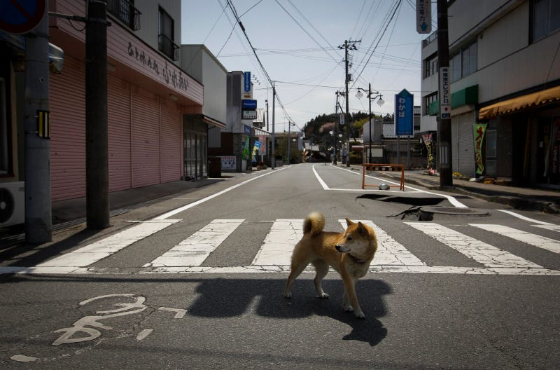 The cars of the Fukushima Nuclear Exclusion Zone