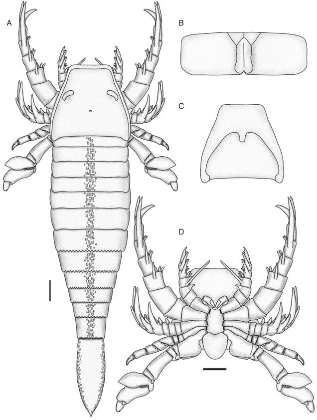 Five-Foot-Long Sea Scorpion Proves the Ancient Oceans Were a Terrifying Place