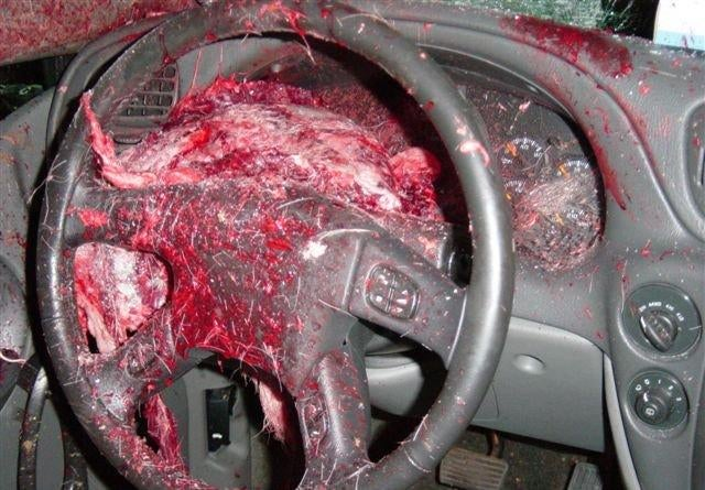 NSFW: Chevy Trailblazer Turns Deer Into Soup At 75 MPH