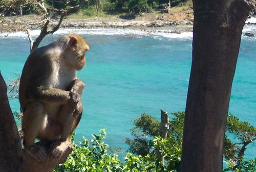 Monkey skull reveals the long lost world of the Caribbean