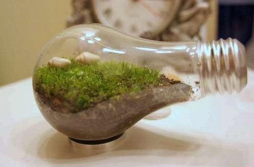 Turn a Lightbulb into a Mini-Terrarium