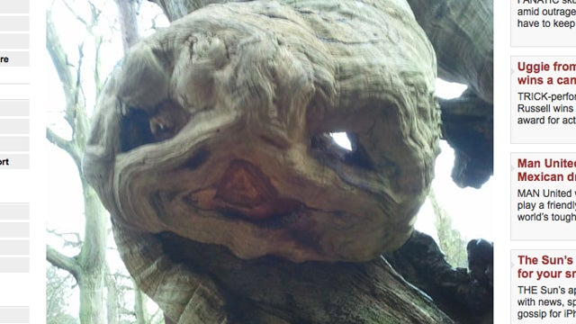 Hi, Would You Like To See A Picture Of A Tree That Looks Like E.T.? Me, Too.