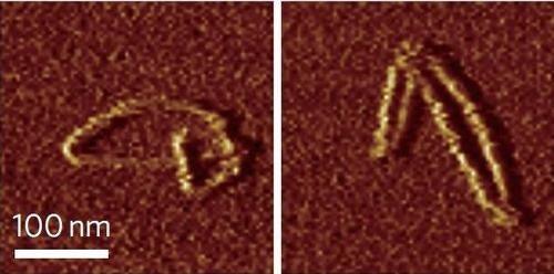 Chemists fold DNA into Möbius strips