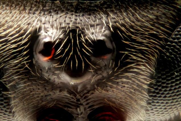 Fotografías macroscópicas tan nítidas que parecen irreales