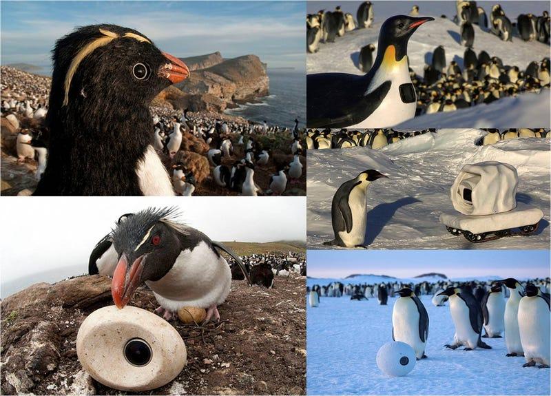 Así son los increíbles robots-espía de pingüinos en el Polo Sur