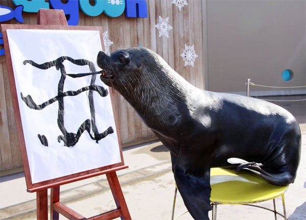 Sea Lion Sees The Writing On The Wall