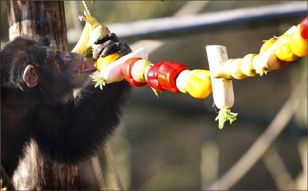 Christmas Primate Loves His Primary Colors