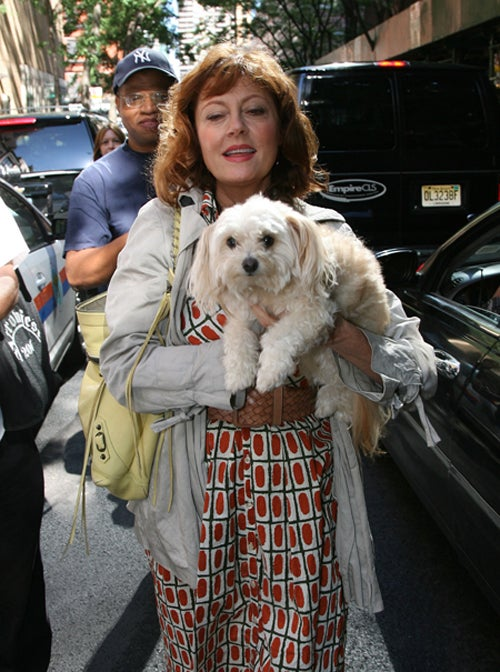 Susan Sarandon Upstaged By Park Avenue Bitch