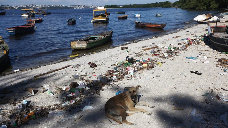 Shocking Photos from the Water Sports Site of the Rio Olympics