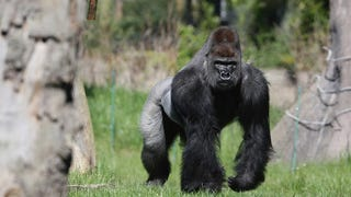 Land Animals That Would Fuck You Up In Hand-To-Hand Combat, Ranked