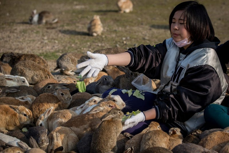 This Japanese Island Is Overrun with Bunnies