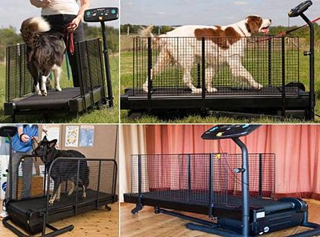 Fit Fur Life Doggy Treadmill Walks That Mutt So You Won't Have To