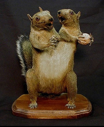 Taxidermist Brings Flying Monkeys and Frankensquirrels to Unlife