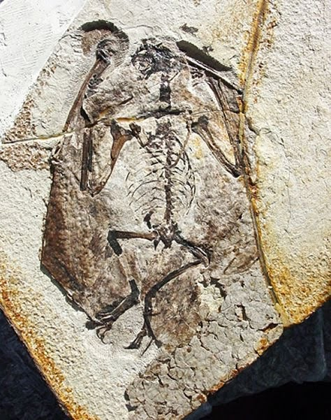 Was there really a vampire who fed on dinosaur blood?