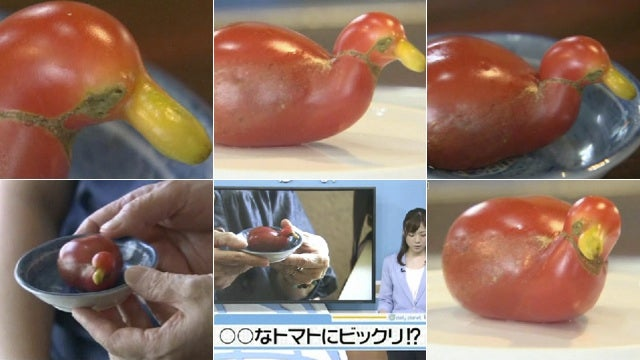 Okay, This Tomato Looks Like a Duck
