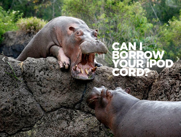 'Hippo Coworker' Is Your Fave New Meme